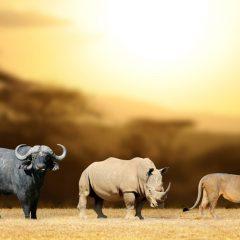 Vakantie Zuid Afrika: historische reis vol variatie